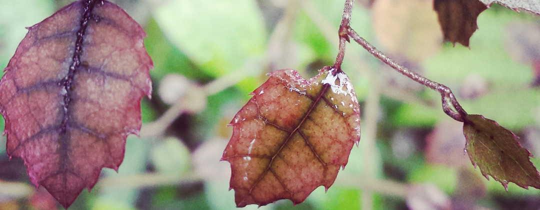 header leaves