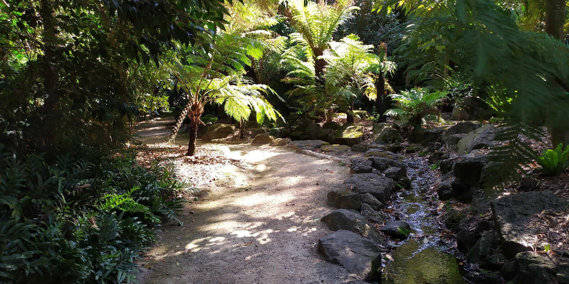GBG rainforest