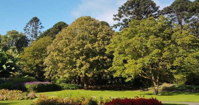 silence at Geelong Botanic Garden