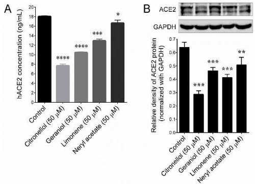 geranium oil reduces COVID-19 binding