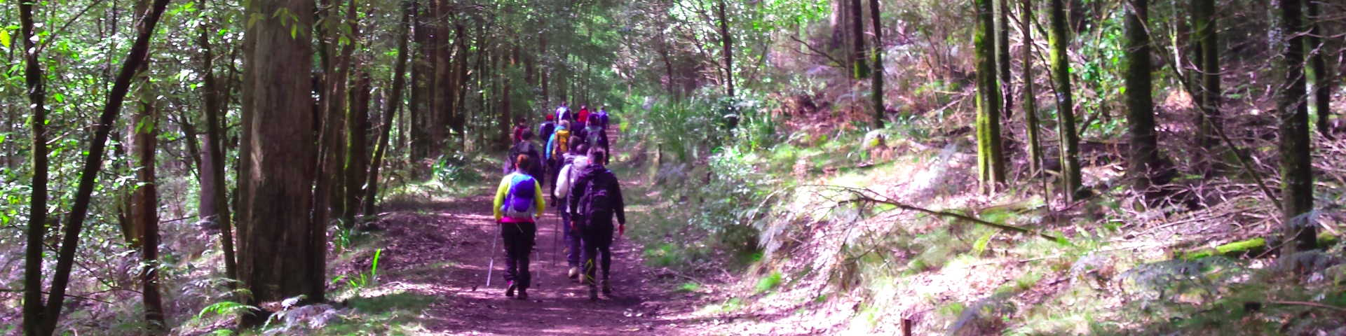 Forest Therapy walkers